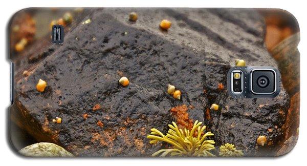 Seashells By The Seashore Galaxy S5 Case