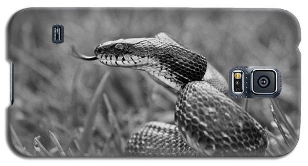 Brown Snake Galaxy S5 Case - Sense by Betsy Knapp