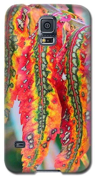 Sensuous Sumac Galaxy S5 Case by Doris Potter