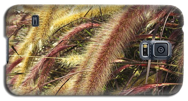 Galaxy S5 Case featuring the digital art Setaria Italica Red Jewel - Red Bristle Grass by Anne Mott