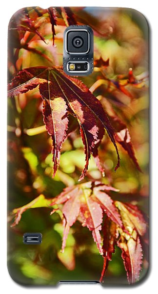 Galaxy S5 Case featuring the photograph Shades Of Autumn by Kerri Ligatich