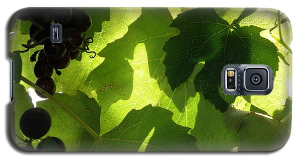 Galaxy S5 Case featuring the photograph Shadow Dancing Grapes by Lainie Wrightson