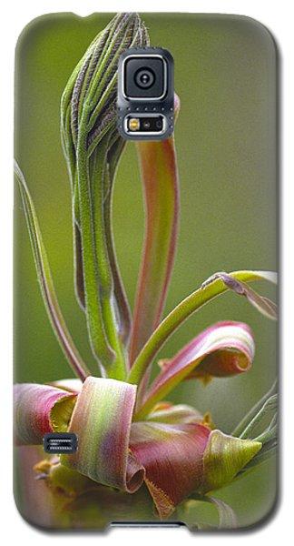 Shagbark Hickory Leaf And Flower Bud Galaxy S5 Case