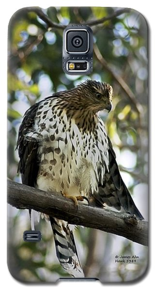Galaxy S5 Case featuring the photograph Sharp Shinned Hawk - Winged Stare -5459 by James Ahn