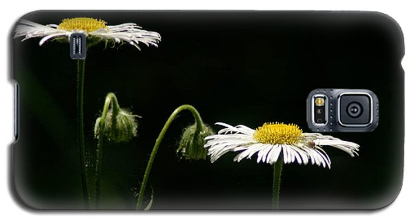 Galaxy S5 Case featuring the photograph Shasta Daisies by Mitch Shindelbower