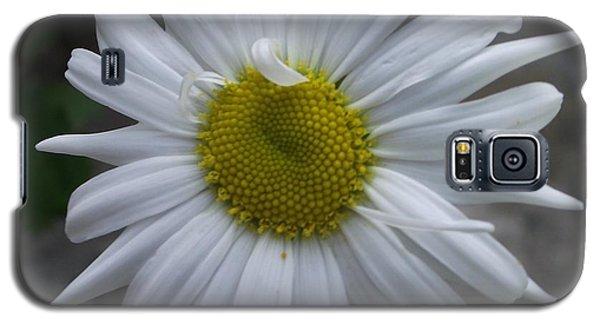 Shasta Daisy Galaxy S5 Case