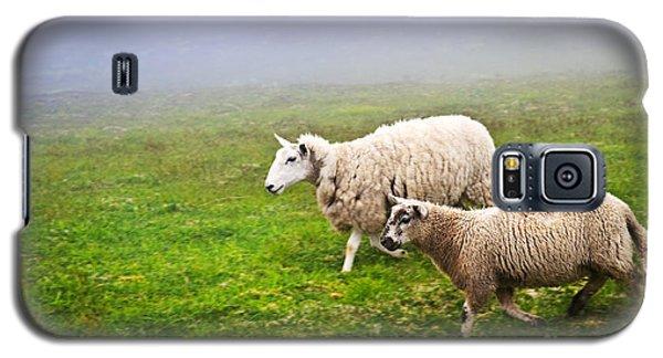 Sheep In Misty Meadow Galaxy S5 Case by Elena Elisseeva