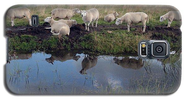 Galaxy S5 Case featuring the photograph Sheep by Vilas Malankar