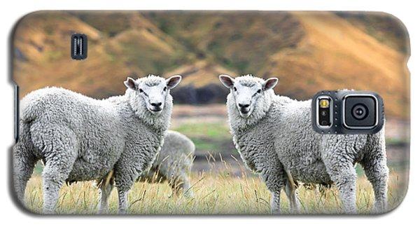 Sheep Galaxy S5 Case - Sheeps by MotHaiBaPhoto Prints