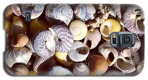 Still Life Galaxy S5 Case - Shells From Brittany by Nic Squirrell