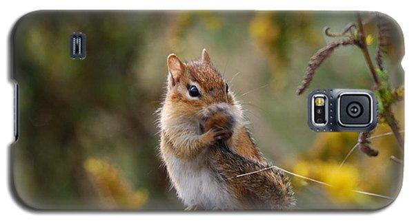 Shy Little Chipmunk Galaxy S5 Case