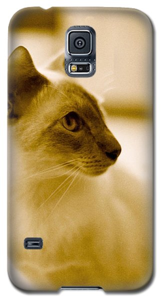Siamese Feline Galaxy S5 Case by Lenny Carter