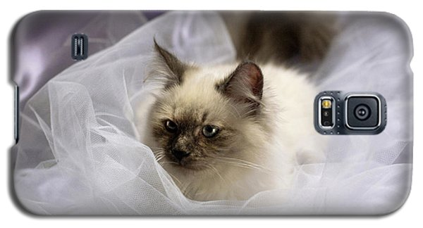 Siberian Kitty On Lilac Galaxy S5 Case
