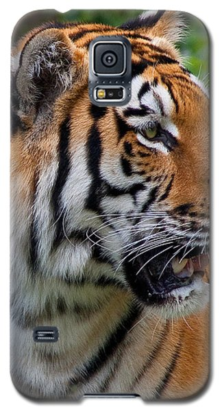 Galaxy S5 Case featuring the photograph Siberian Tiger by Cindy Haggerty