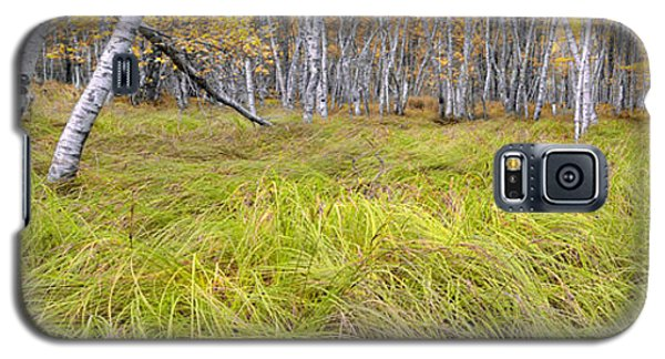 Sieur De Monts Forest - Acadia National Park Galaxy S5 Case