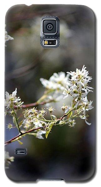 Signs Of Spring Galaxy S5 Case by Deborah Hughes