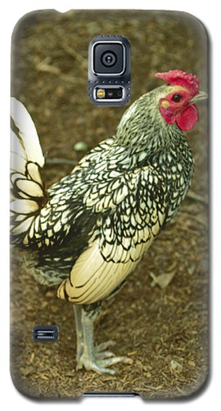 Silver Seabright Rooster Galaxy S5 Case