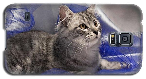 Silver Siberian Kitty On Blue Galaxy S5 Case