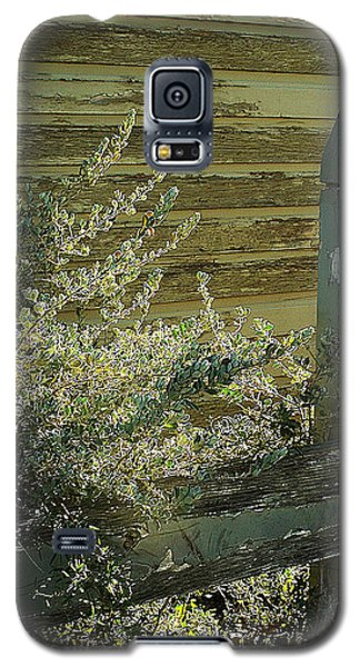 Galaxy S5 Case featuring the photograph Silverleaf In Morning Sun by Louis Nugent