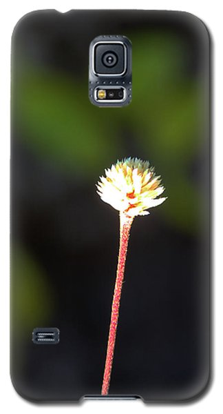 Galaxy S5 Case featuring the photograph Simplicity by Kerri Ligatich