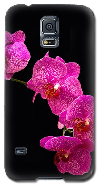 Simply Beautiful Purple Orchids Galaxy S5 Case