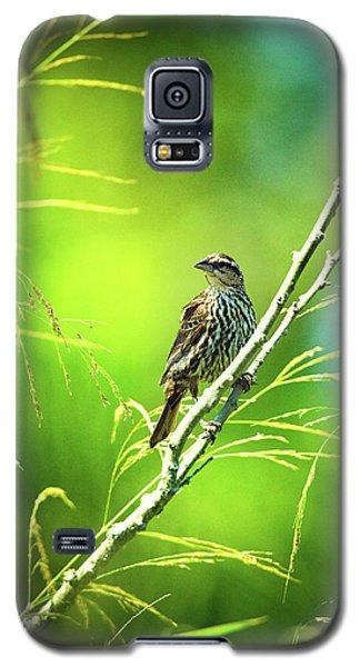 Singing Song Sparrow Galaxy S5 Case