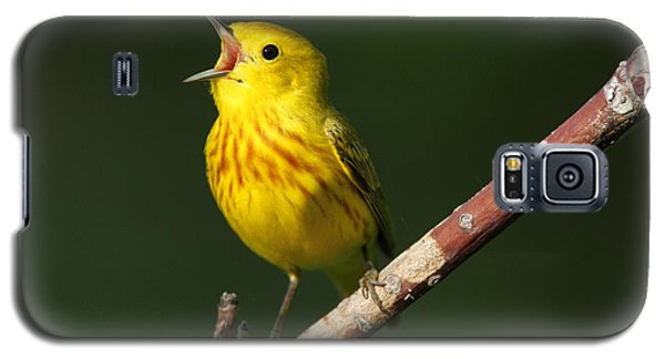 Singing Yellow Warbler Galaxy S5 Case