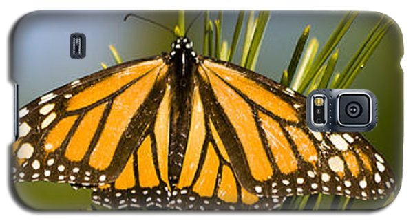 Single Monarch Butterfly Galaxy S5 Case by Darcy Michaelchuk