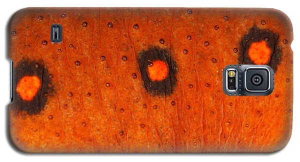 Skin Of Eastern Newt Galaxy S5 Case