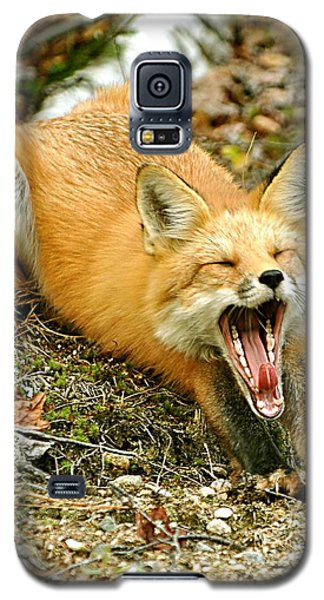 Galaxy S5 Case featuring the photograph Sleepy Fox by Rick Frost
