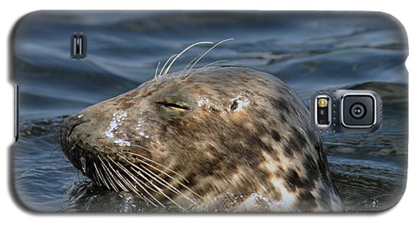 Sleepy Seal Galaxy S5 Case