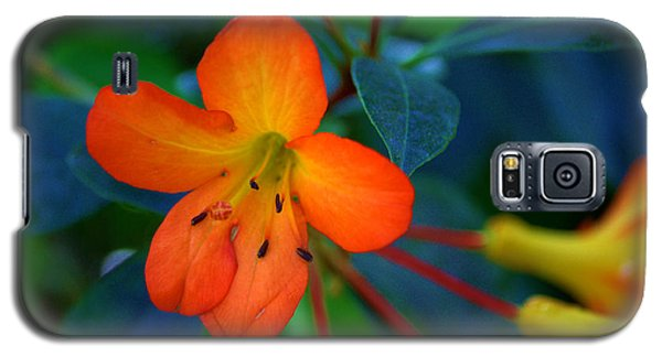 Galaxy S5 Case featuring the photograph Small Orange Flower by Tikvah's Hope