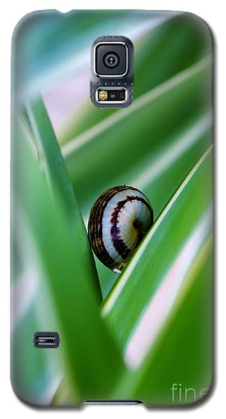 Galaxy S5 Case featuring the photograph Snail On Yuca Leaf by Werner Lehmann