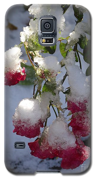 Snow Covered Roses Galaxy S5 Case