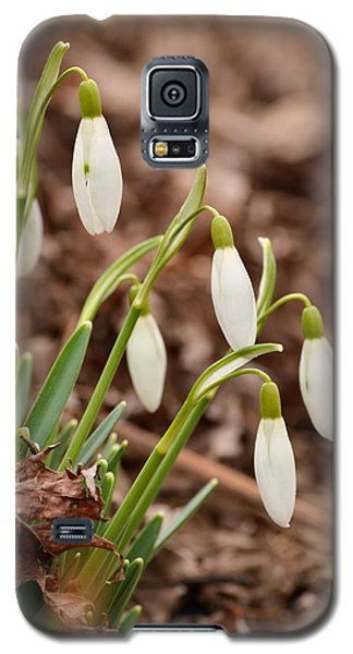 Snow Drops Galaxy S5 Case by JD Grimes