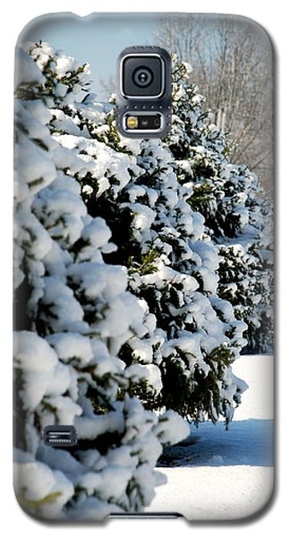 Galaxy S5 Case featuring the photograph Snow In The Trees by Mark Dodd