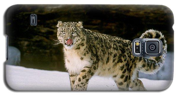 Snow Leopard 2 Galaxy S5 Case
