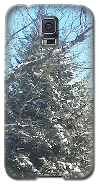 Galaxy S5 Case featuring the photograph Snow Sprinkled Pine by Pamela Hyde Wilson