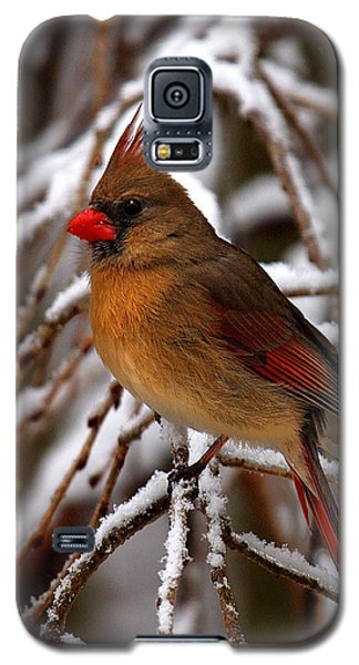 Snowbirds--cardinal Dsb025 Galaxy S5 Case