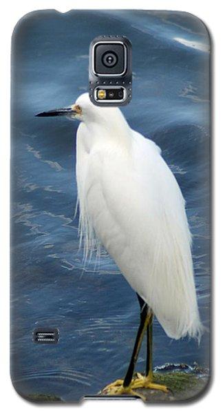 Snowy Egret 1 Galaxy S5 Case by Joe Faherty