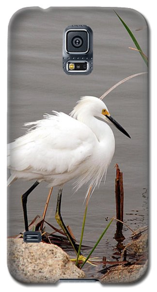 Galaxy S5 Case featuring the photograph Snowy Egret by Kay Lovingood