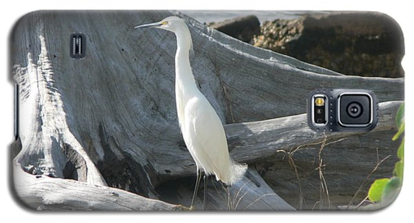 Galaxy S5 Case featuring the photograph Snowy Egret by Laurel Best
