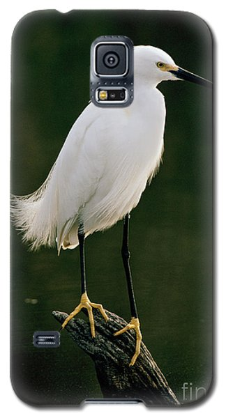 Galaxy S5 Case featuring the photograph Snowy Egret Portrait by Doug Herr