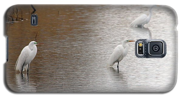 Galaxy S5 Case featuring the photograph Snowy Egret Trio by Mark J Seefeldt