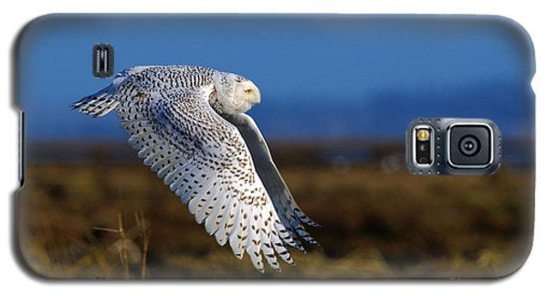 Snowy Owl 1b Galaxy S5 Case