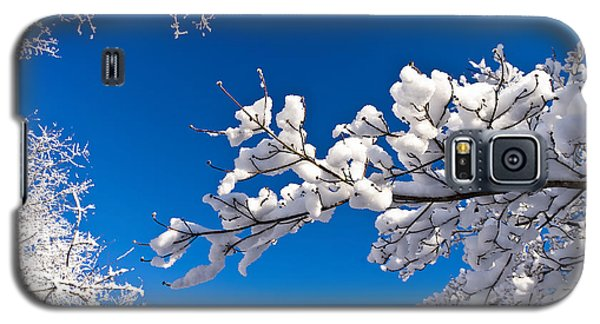 Snowy Trees And Blue Sky Galaxy S5 Case