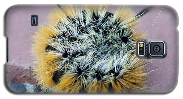 Snug As A Bug Galaxy S5 Case by Betty Depee