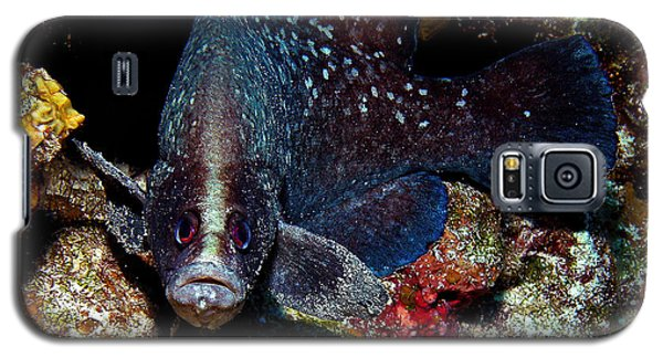 Soapfish Galaxy S5 Case