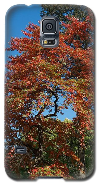 Galaxy S5 Case featuring the photograph Soaring Fall by Joseph Yarbrough