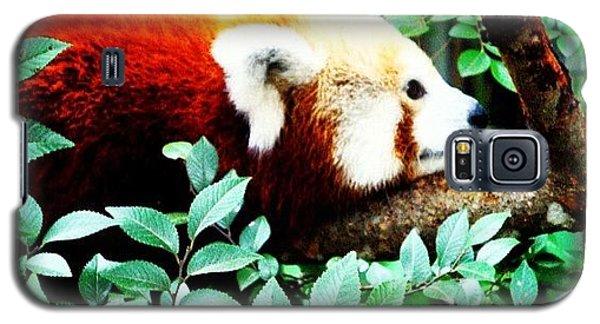 Cause Galaxy S5 Case - #social #zoo #animals #wildlife by Susan McGurl